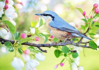 Bird on Tree Spring